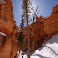 Navajo Loop Trail.- Navajo + Queen's Garden Loop Trail