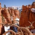 Bryce Canyon's Queen's Garden.- Navajo + Queen's Garden Loop Trail
