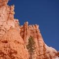 Hoodoos along the Queen's Garden Loop Trail.- Navajo + Queen's Garden Loop Trail