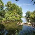 Issaquah Creek at Lake Sammamish State Park.- Lake Sammamish State Park