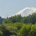 View of Mount Rainier (14,411') from Marymoor Park.- Marymoor Park