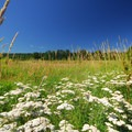 Marymoor Park's extensive natural area.- Marymoor Park