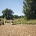 Marymoor Park off-leash dog area.- Marymoor Park