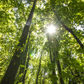Forest canopy at Saint Edward State Park.- Saint Edward State Park