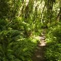 South Canyon Trail at Saint Edward State Park.- South Canyon Trail Loop