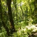 Hike along the South Canyon Trail at at Saint Edward State Park.- South Canyon Trail Loop