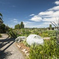 The Magnuson Community Garden.- Warren G. Magnuson Park