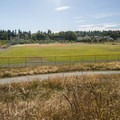 Looking out over baseball field #8 from Warren G. Magnuson Park wetlands area.- Warren G. Magnuson Park