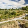 Warren G. Magnuson Park wetlands.- Warren G. Magnuson Park