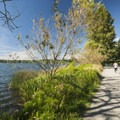 Green Lake's eastern shore and the Green Lake Inner Loop Trail.- Green Lake Park