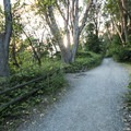 Path along the bluff at Lincoln Park.- Lincoln Park