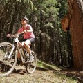 The ride winds through a lodgepole and ponderosa pine forest.- North Umpqua Trail Mountain Biking: Lemelo Segment
