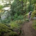 A rare, smooth section of trail near the lower trailhead.- North Umpqua Trail Mountain Biking: Dread and Terror Segment