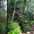 The trail alternates between smooth and rougher sections.- Snowshoe + Keekwulee Falls via Denny Creek Trail