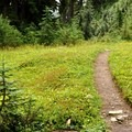 The trail to Dock Butte.- Dock Butte Hike