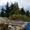 Former lookout site at Dock Butte (5,200').- Dock Butte Hike