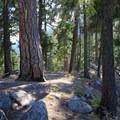The Icicle Ridge Trail.- Icicle Ridge Trail