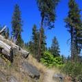 Icicle Ridge Trail.- Icicle Ridge Trail