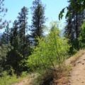 Switchbacks on the Icicle Ridge Trail.- Icicle Ridge Trail