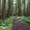 The trail is lined with moss and ferns.- Wallace Falls + Lake via Greg Ball Trail
