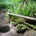 Well-maintained trail.- Wallace Falls + Lake via Greg Ball Trail