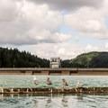 Alder Dam was constructed in 1944, creating Alder Lake.- Alder Lake