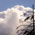 A pearched eagle at Alder Lake.- Alder Lake