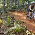 This section of Springboard cuts through an area of distinctive red clay soil.- Alsea Flow Trails