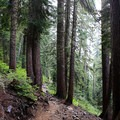 The Snow Lake Trail proceeds through pristine wilderness.- Snow Lake Hiking Trail