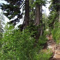 Trail infastructure to mitigate the heavy use.- Snow Lake Hiking Trail