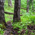 The trail gets rougher after leaving Waptus.- Spade Lake