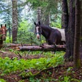 Popular horse trail.- Waptus River to Waptus Lake
