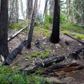 Trees burned by past fores fire.- Waptus River to Waptus Lake