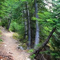 The Mount Catherine Trail winds through a mature forest of Douglas fir and mountain hemlock.- Mount Catherine