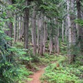 The trail to Mount Catherine is well maintained.- Mount Catherine