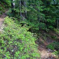 Switchbacks on the Mount Catherine Trail. - Mount Catherine