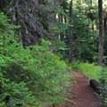The Easton Ridge Trail.- Easton Ridge Trail