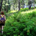The ridge trail begins in a shaded, lush drainage.- Easton Ridge Trail