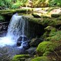 Small falls on Silver Creek.- Easton Ridge Trail