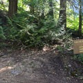A trail junction provides some options if you would like to continue the hike.- Easton Ridge Trail