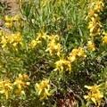 Unidentified species (help us identify it by providing feedback).- Scott Mountain