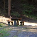 Typical campground with picnic table.- Mineral Springs Campground