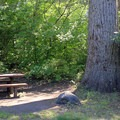 Typical site at Tumwater Campground.- Tumwater Campground