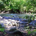 Explore Chiwaukum Creek from select campsites.- Tumwater Campground