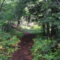 The trail to Red Top Lookout.- Red Top Lookout
