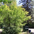 Restrooms and dumpsters are located at the fork. - Tumwater Campground