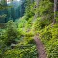 Trail through lush green ferns and mosses.- Lake Elizabeth