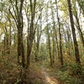 The trail along Coyote Creek passes through a mixed deciduous forest.- Fern Ridge Wildlife Area, West Coyote Unit