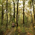 The mixed deciduous forest in the West Coyote Unit.- Fern Ridge Wildlife Area, West Coyote Unit