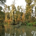 There are only a few views of Coyote Creek along the trail.- Fern Ridge Wildlife Area, West Coyote Unit